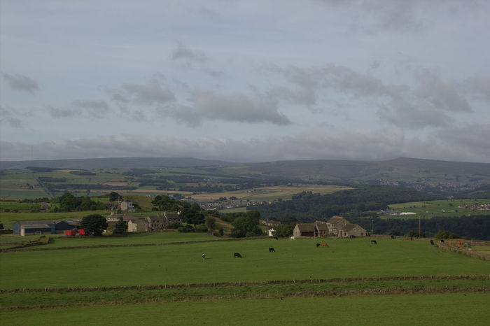 One of the views from Castle Hill Farmland Hills Sky - Clouds Grass Area Farm Tranquility Tranquil Scene Tree Trees