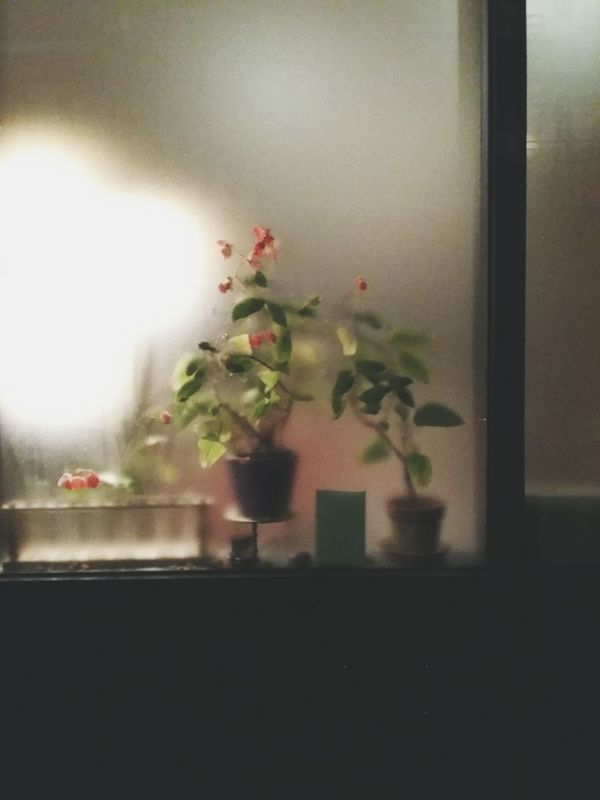 window with flowers. · Paris France Window shopping window view Plants Night Lights night time night Dim Light Winter