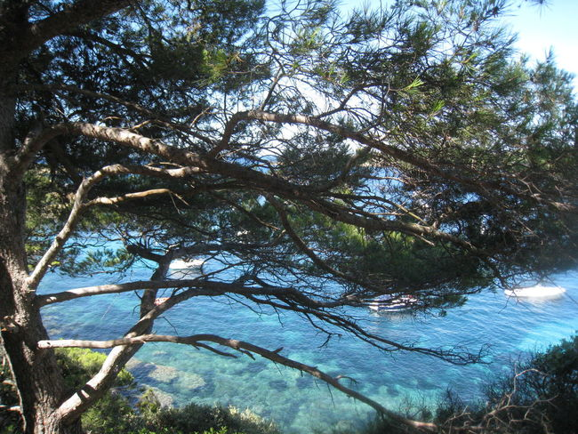 Sea Porquerolles France Maritime Pines Landscapes With WhiteWall