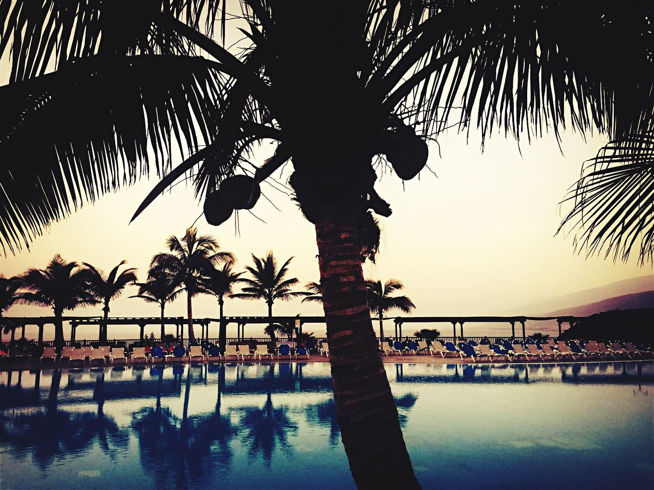 Holiday Tranquility Vacations Tourist Resort Swimming Pool Palm Tree , Tree Water Tree Trunk Silhouette Leisure Activity Lifestyles Sunset Horizon Over Water Scenics Branch Growth Palm Leaf Nature Calm Swimmingpool Shadow Shadows & Lights Palm Tree Silhouette First Eyeem Photo