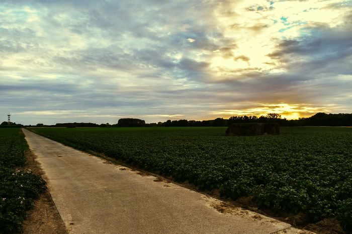 On the road again! Field Agriculture Crop  Cloud - Sky Landscape Tranquility No People Freshness Nature Rural Scene Tree Outdoors Beauty In Nature Day Water Sky Fragility Tree Area Close-up Sunset_collection sunset #sun #clouds #skylovers #sky #nature #beautifulinnature #naturalbeauty photography landscape Live For The Story The Great Outdoors - 2017 EyeEm Awards