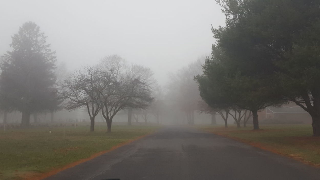 Fog Tranquility Landscape Nature Beauty In Nature Foggy Morning Foggy Cemetery Trees Silhouettes Trees