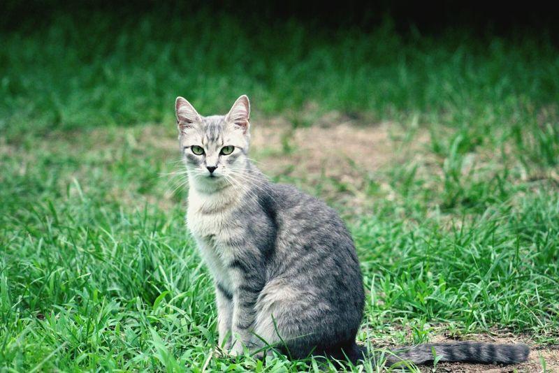 Catsofinstagram Cats Of EyeEm I Love My Cats  My Cats Catseyes