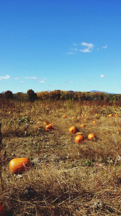 Pickin Pumkins Pumpkin Patch October Love Scenic Farm