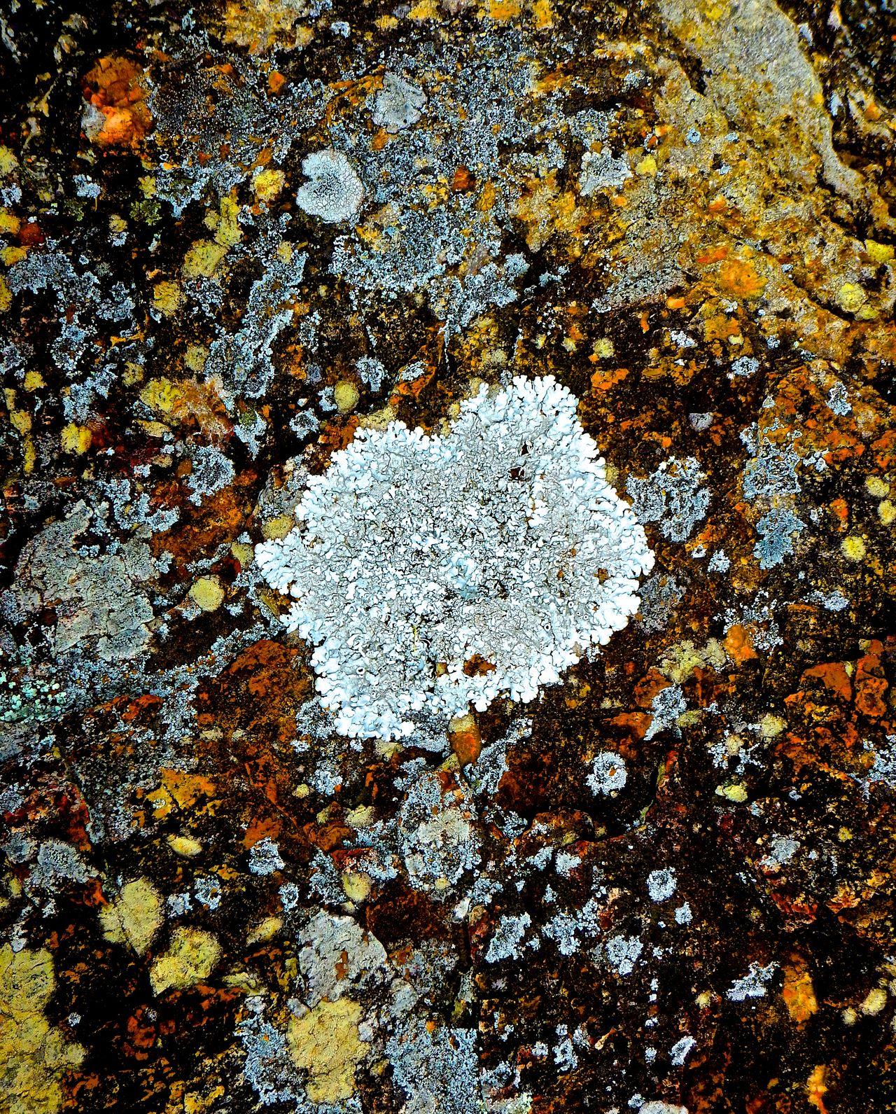 in Tathra, Australia. Art Is Everywhere Moss Moss & Lichen Moss Close Up Moss-covered Mossy Mossy Rock Mossy Stone Moss‐grown Rock