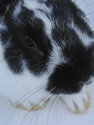 My sweet bunny stefani🐰