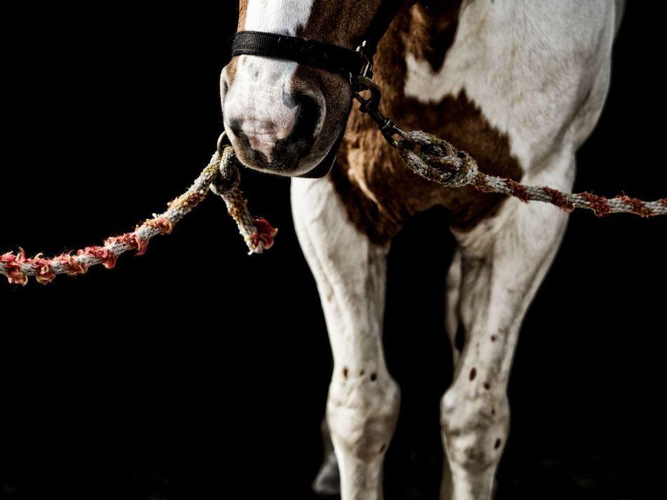 Beautiful stock photos of dark, Animal Themes, Copy Space, Domestic Animals, Halter