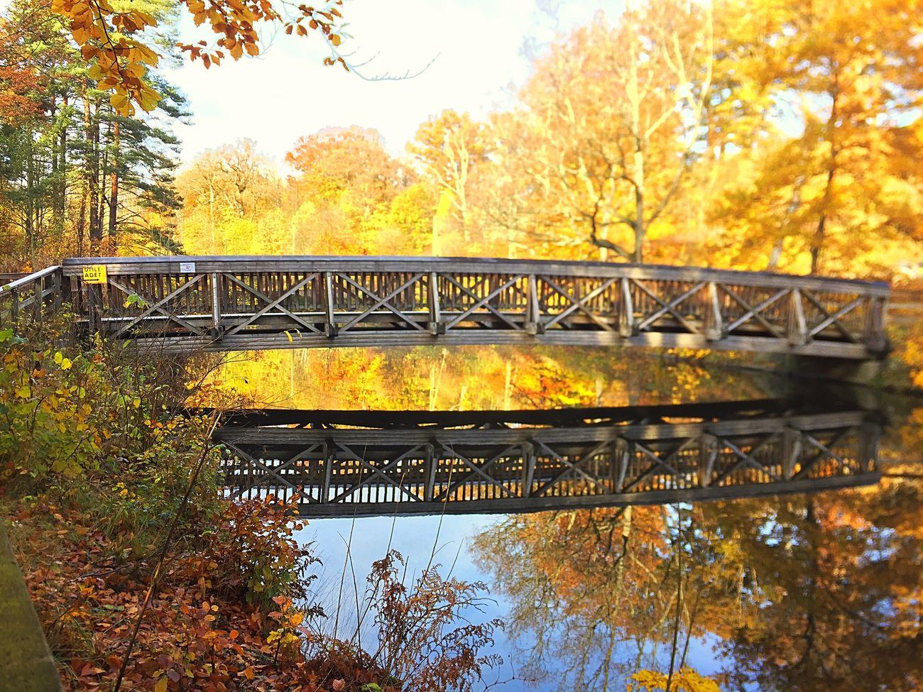 Tree Autumn Yellow Outdoors Nature Water Railway Bridge Beauty In Nature Architecture Beautiful Light EyeEm Nature Lover