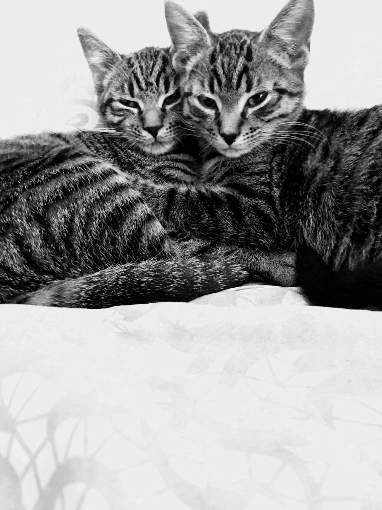 Mia and Maia Babys Kitten Check This Out Selective Focus Relaxing Freshness Lifeisbeautiful Homelover Home Gift Best  Ourcat Love Domestic Cat Feline Pets Indoors  Domestic Animals Mammal No People Animal Themes Portrait Friendship Close-up Day EyeEmNewHere