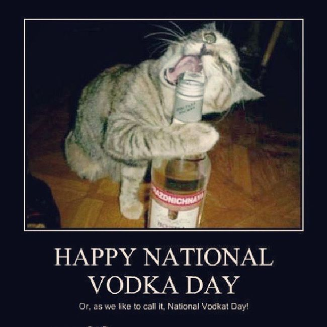 Nationalvodkaday Vodka Drinks