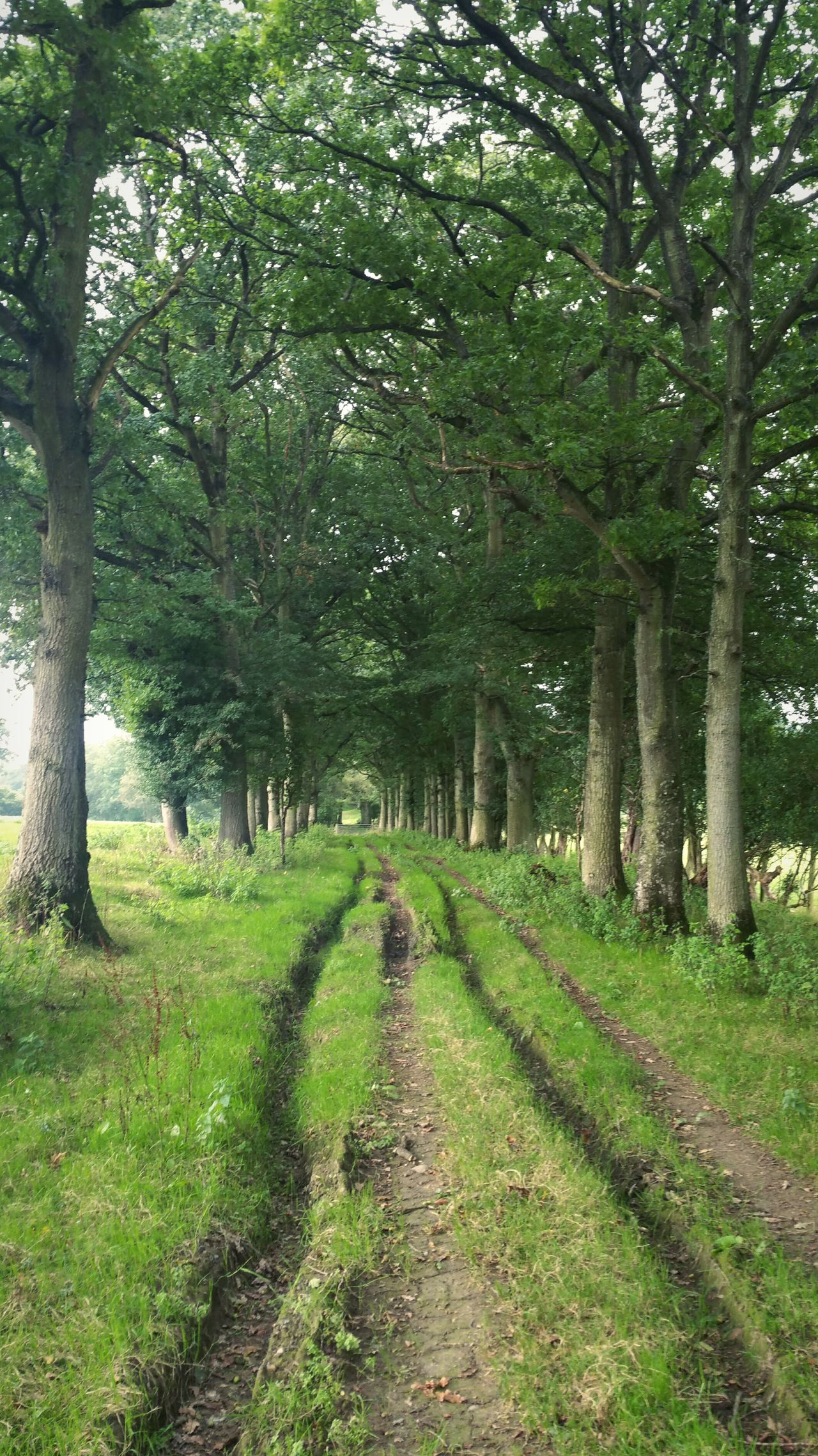 ... an Alley ... Tree Green Color Grass Growth Nature Outdoors Tranquility The Way Forward Tranquil Scene No People Landscape Scenics Beauty In Nature Day Countryside Rural Wales Powys Lush Vegetation Trees Lane Country Lane