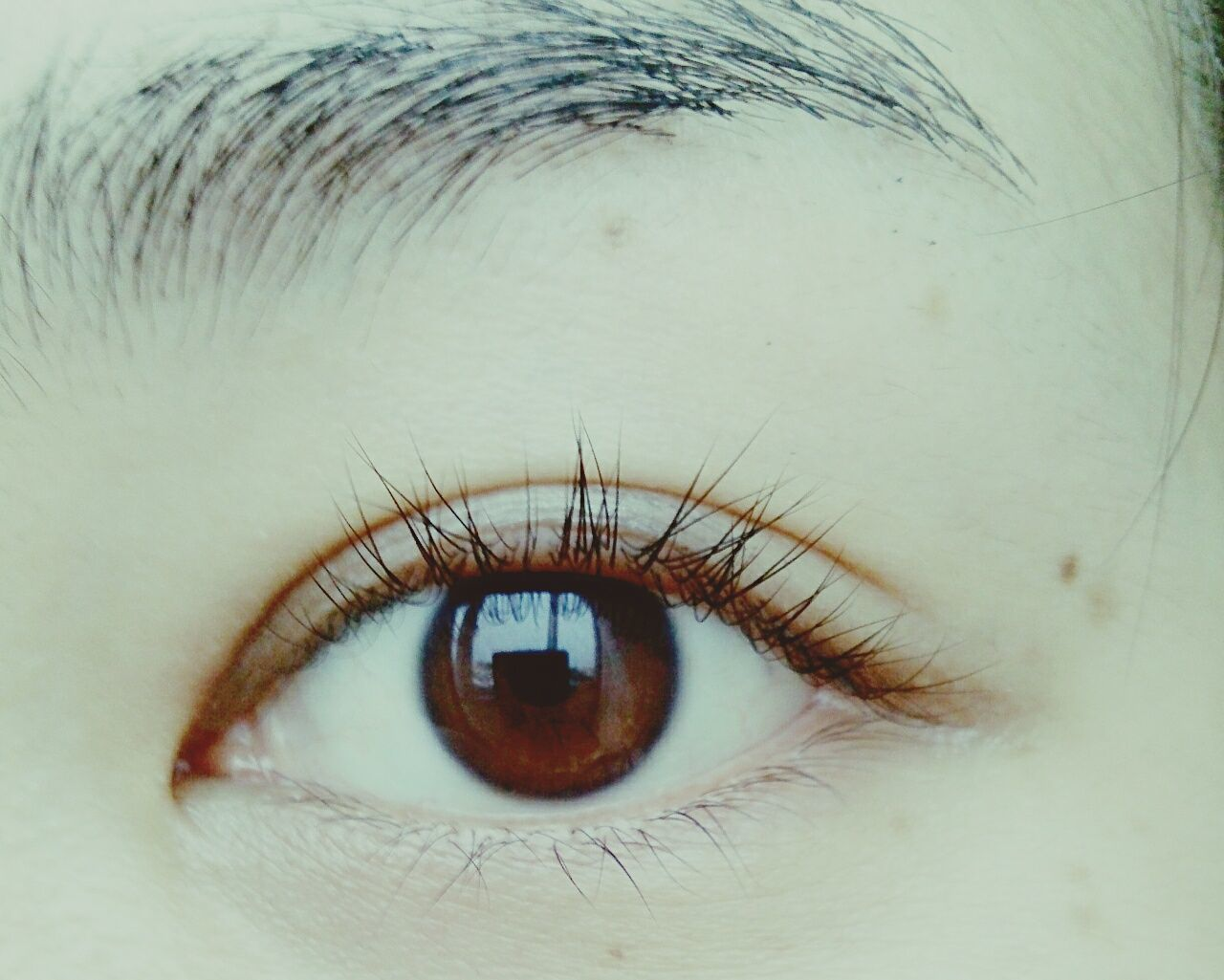 human eye, looking at camera, close-up, one person, human body part, eyelash, real people, portrait, eyesight, iris - eye, eyeball, indoors, sensory perception, day, people