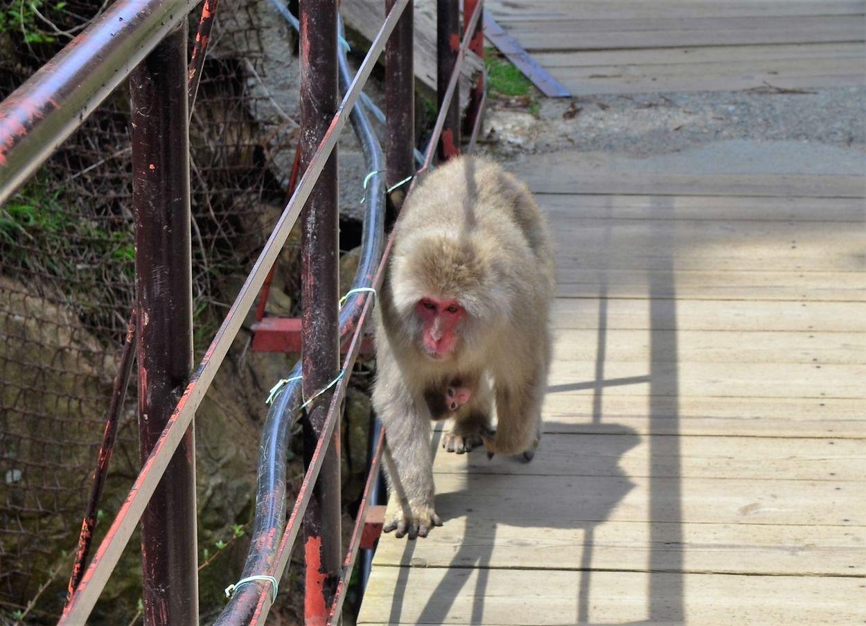 Animal Themes Baby Animal Close-up Cute Japan Mammal No People Outdoors Snow Monkey Snow Monkey Baby