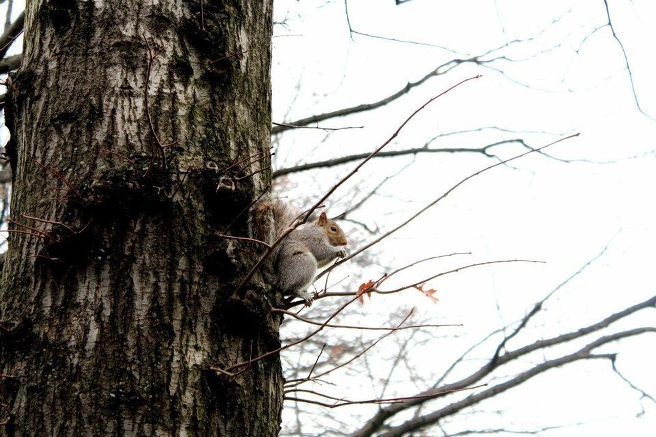 NYC NYC Photography Manhattan Squirrel Central Park Animal Wildlife Animals In The Wild Nature No People Branch Outdoors One Animal Animal Themes Day Winter Bird Mammal Perching Sky Close-up