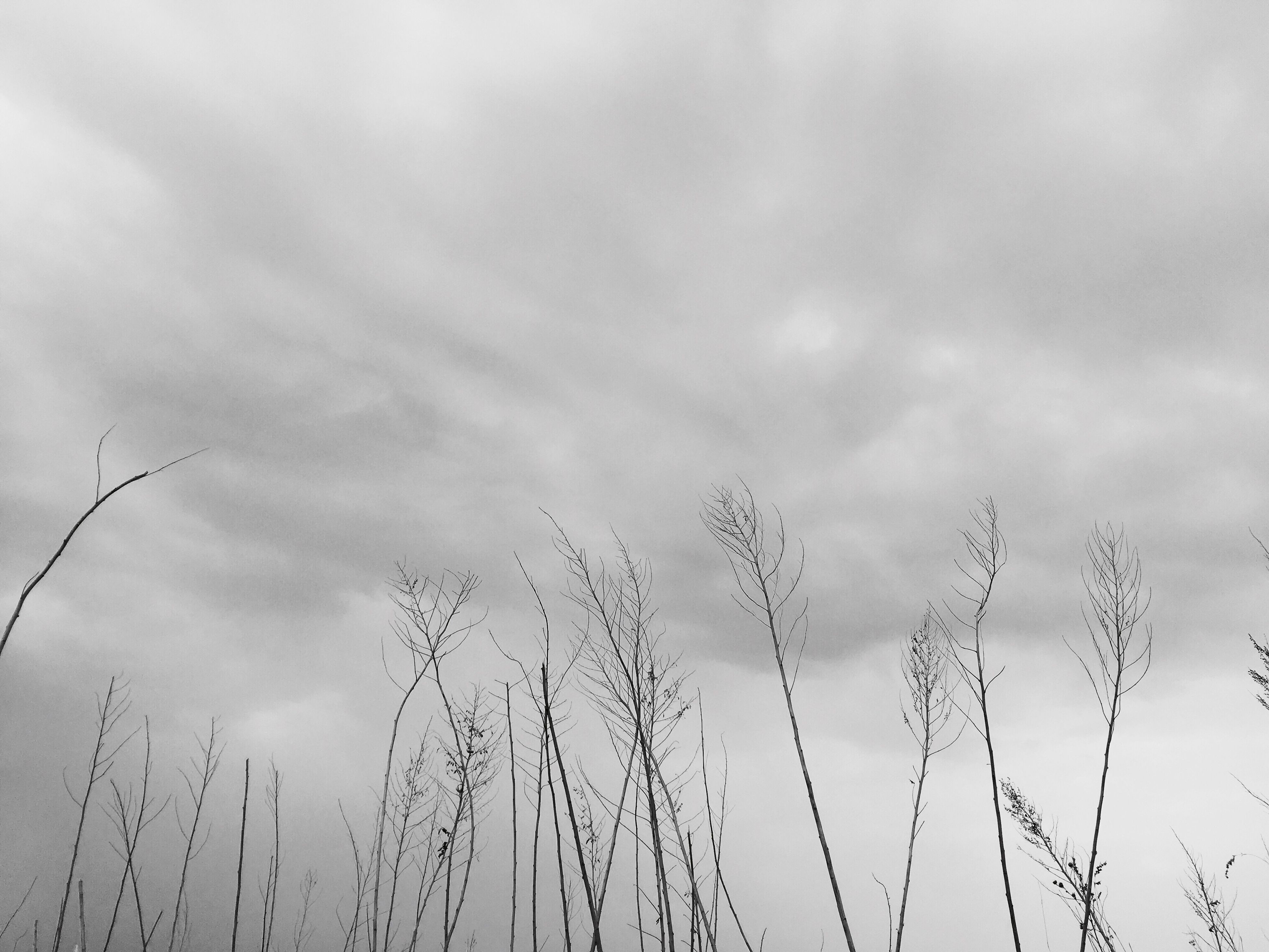 no people, cloud - sky, animal themes, bird, sky, low angle view, large group of animals, day, nature, outdoors, animals in the wild, flock of birds, close-up