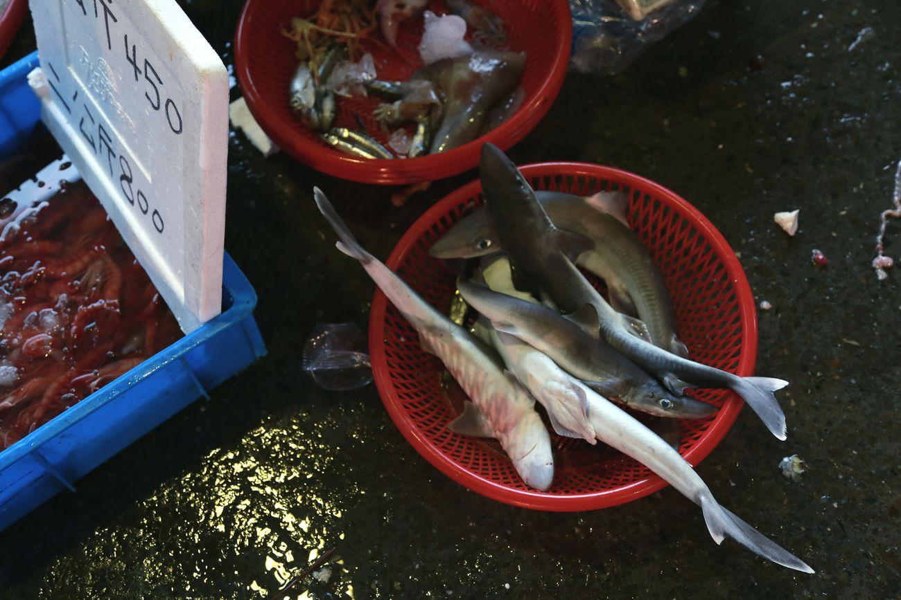 Fishing Village Fish Market baby Sharks😨😱 Shootermag The Market From My Eye Eye4photography  Yilan NanFangAo