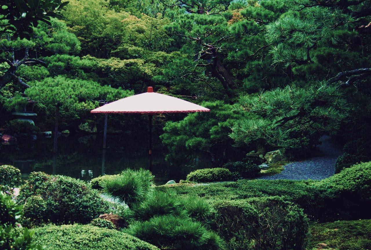 Parasol Amidst Plants In Japanese Garden