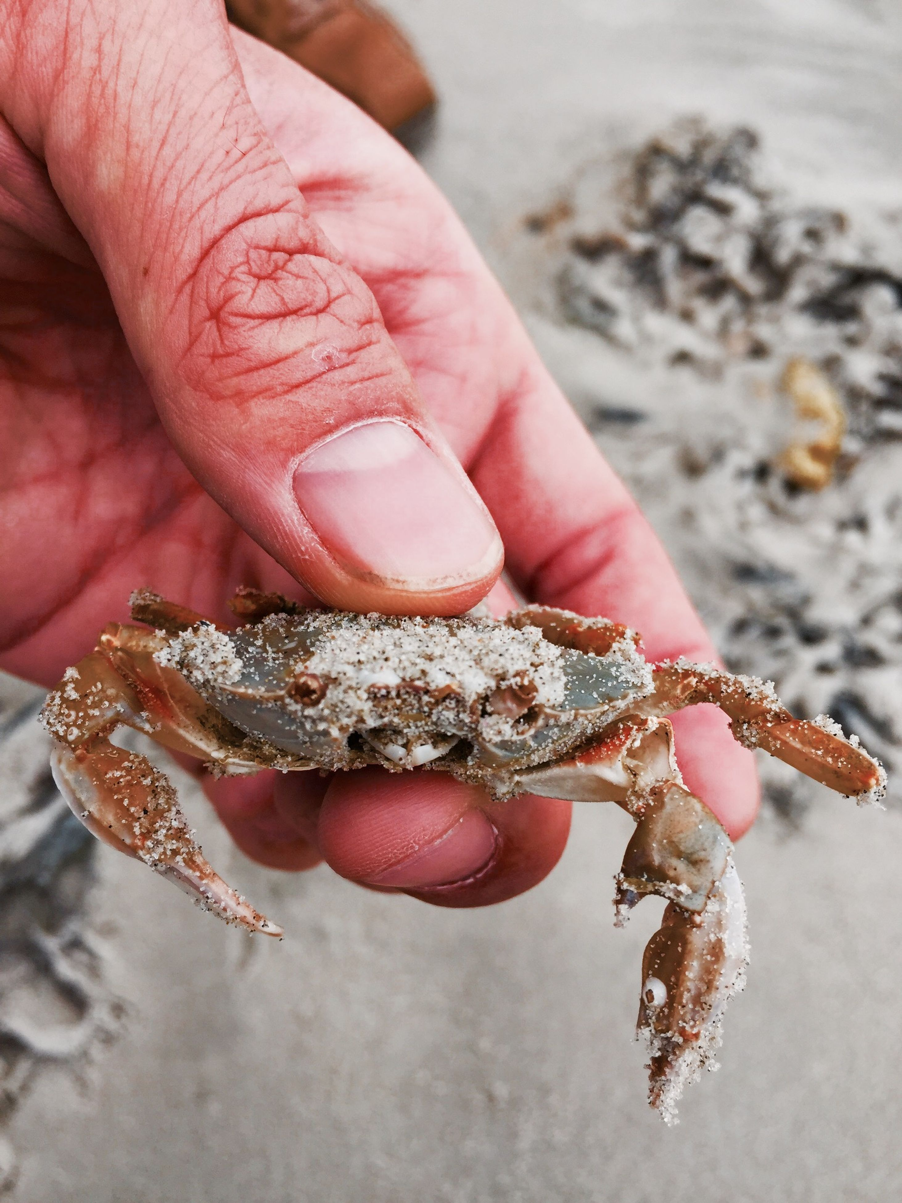 person, part of, close-up, cropped, focus on foreground, holding, unrecognizable person, human finger, animals in the wild, animal themes, seafood, dead animal, seashell, wildlife, jewelry, day, starfish