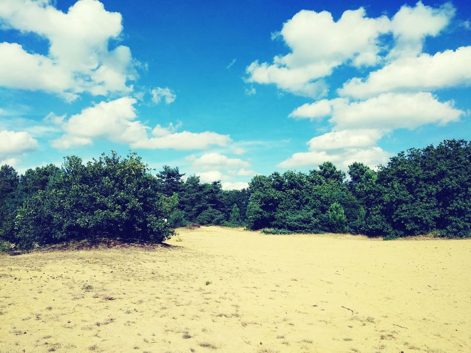 Forest Limburg Sand Trees Sky Cloud Tranquility Non-urban Scene Beauty In Nature Cloud - Sky Day Outdoors Nature Belgium