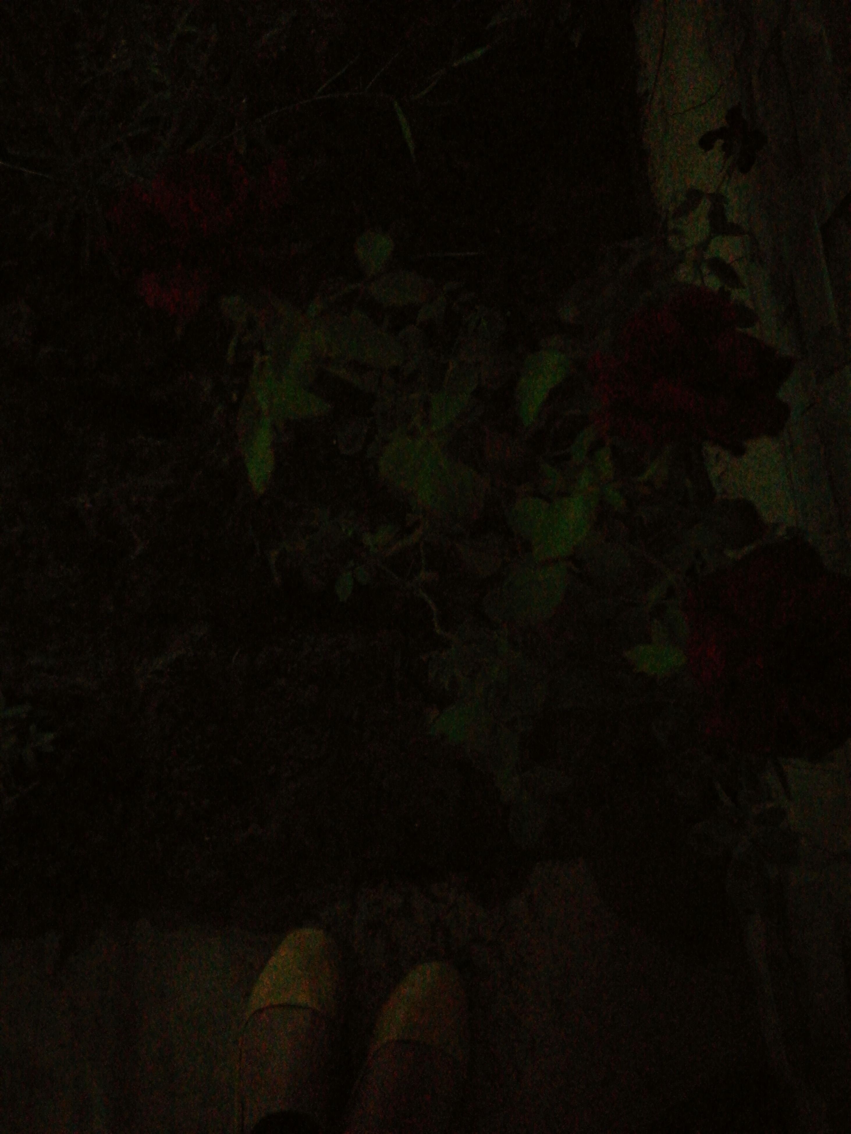 dark, night, darkroom, black background, person, studio shot, darkness, green, green color, outline, focus on shadow