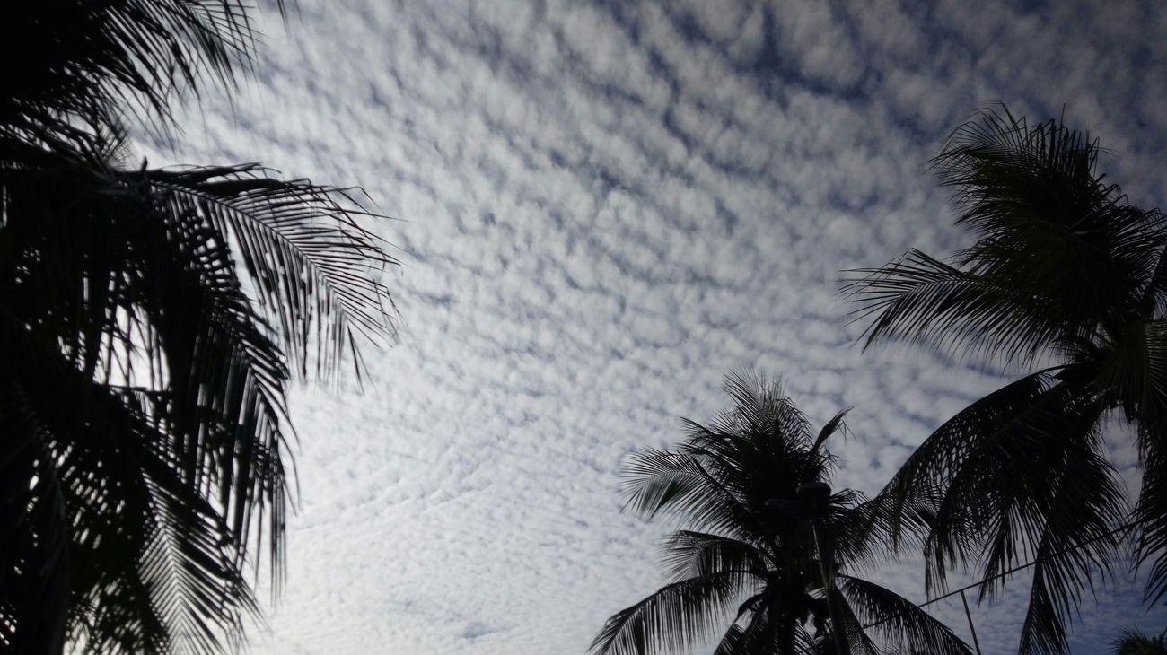 Nature Day Sky Lindo  CeuPerfeito Tarde  Cada dia fica mais lindo nosso céu! Pordosol FortalCity Beauty In Nature Semfiltro FinalDeTarde Belezanatural Sunset Tranquility Photographer Love Deslumbrante Blue