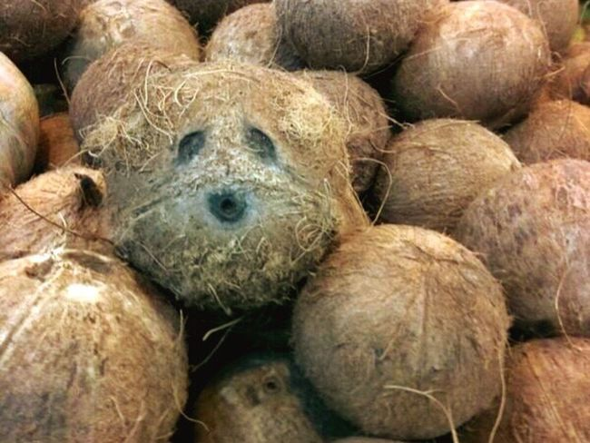 coco nuts Coconut Food With Faces Weird Food Coconut Tree