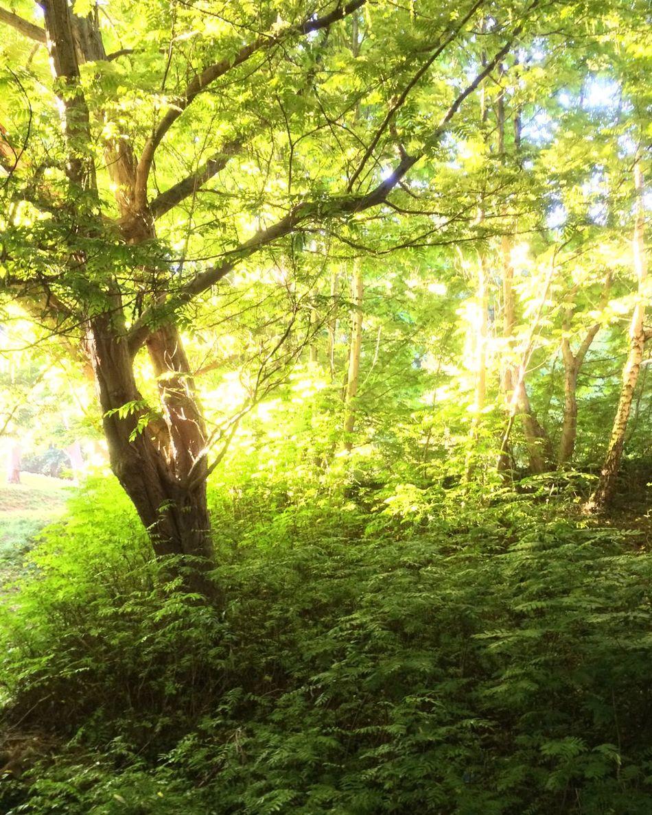 Color Palette Evening Sunlight Woods Green Ferns First Eyeem Photo