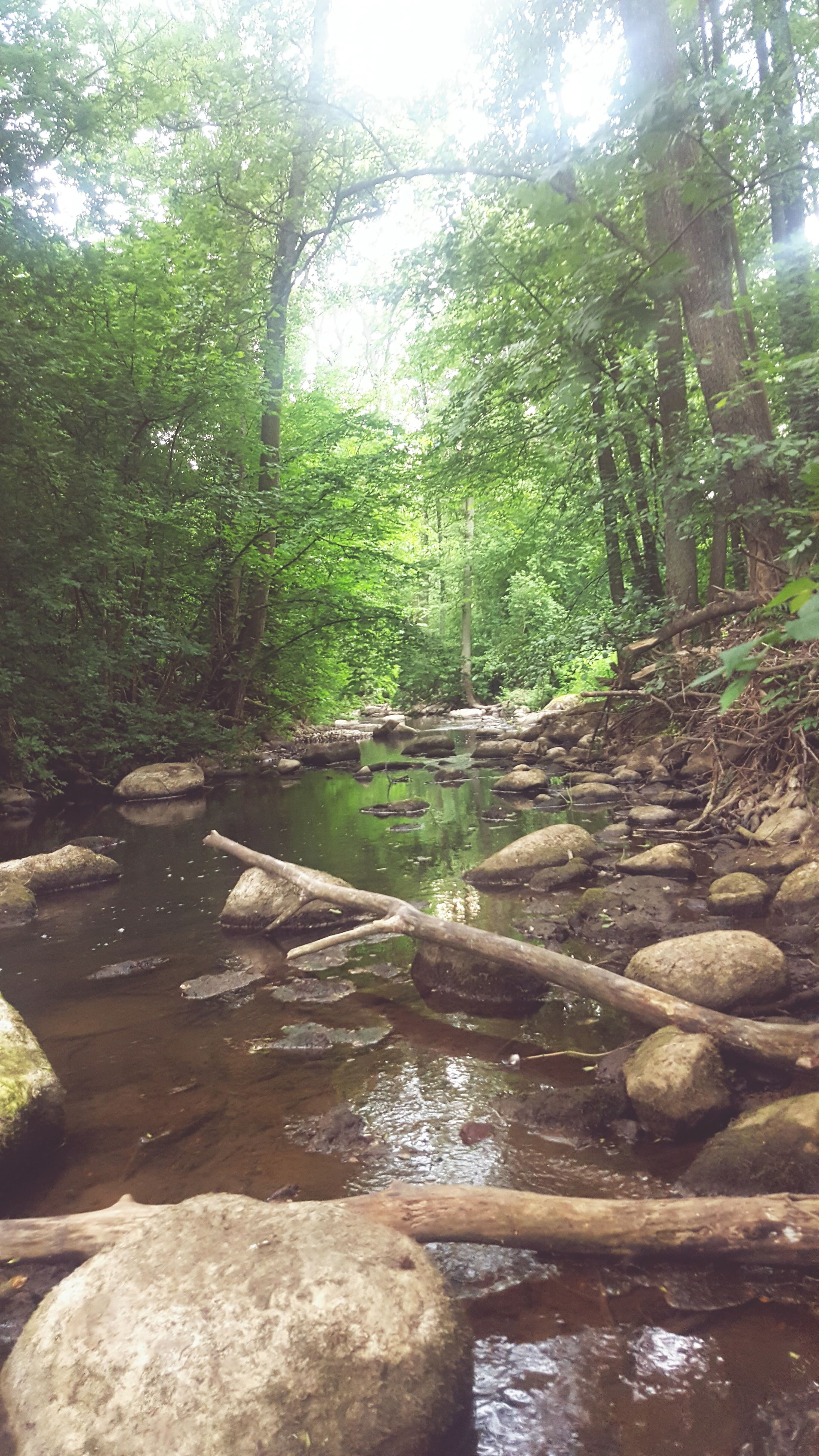 tree, tranquility, water, forest, tranquil scene, nature, scenics, beauty in nature, growth, tree trunk, stream, river, non-urban scene, sunlight, idyllic, woodland, day, green color, outdoors, rock - object