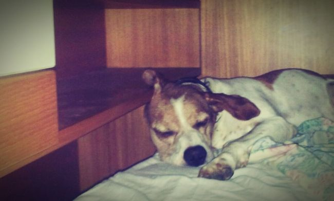 I Love My Dog My Dogs Are Cooler Than Your Kids Dog Relaxing Love ♥