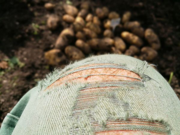 Close-up Day Outdoors Nature Potatoes Knees Farmer Farmhouse Farming Design Jeans Clothing Jeanslover Model