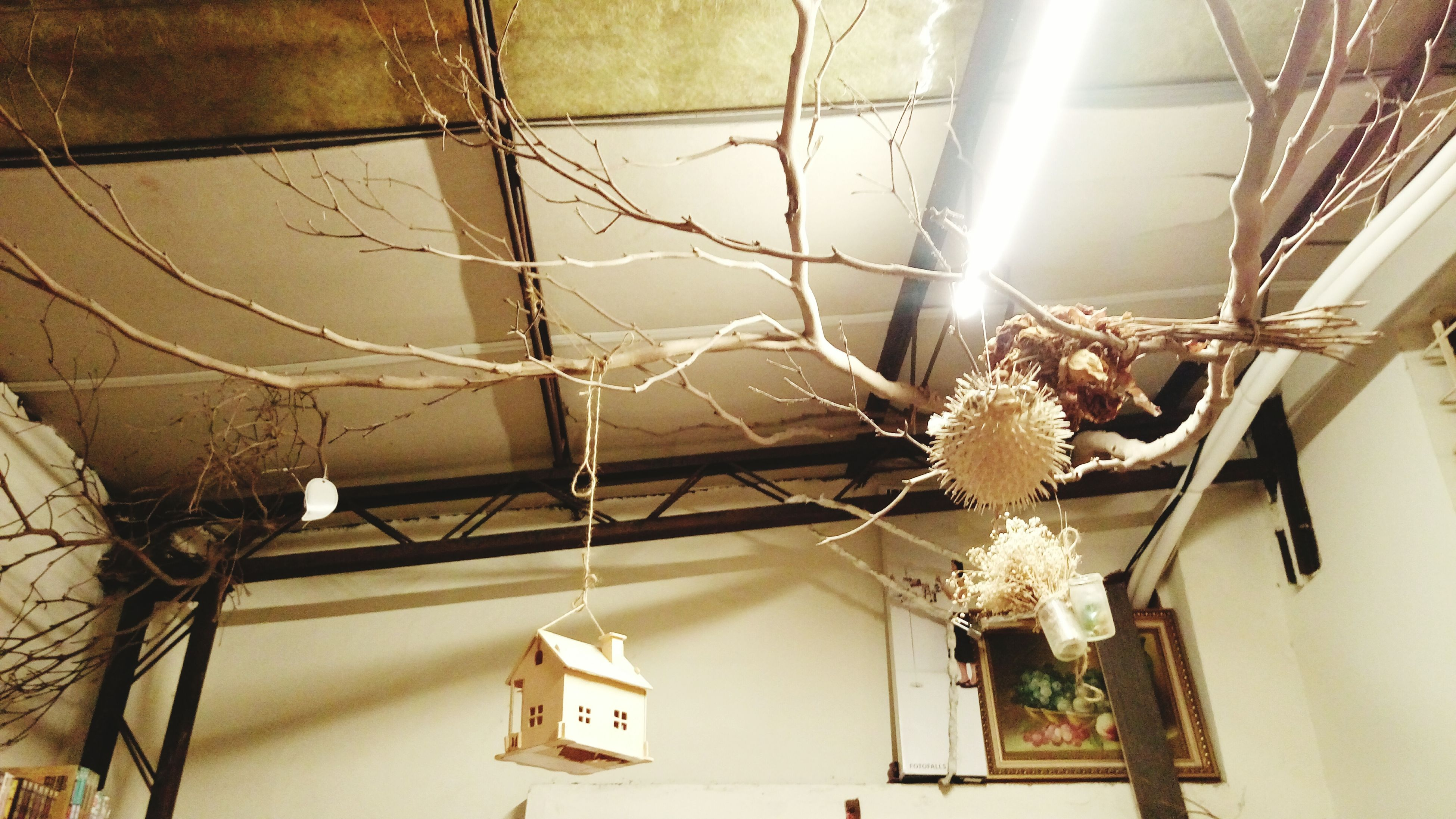 hanging, low angle view, lighting equipment, built structure, architecture, indoors, electricity, decoration, ceiling, house, electric lamp, illuminated, building exterior, flower, home interior, window, no people, wall - building feature, chandelier, day