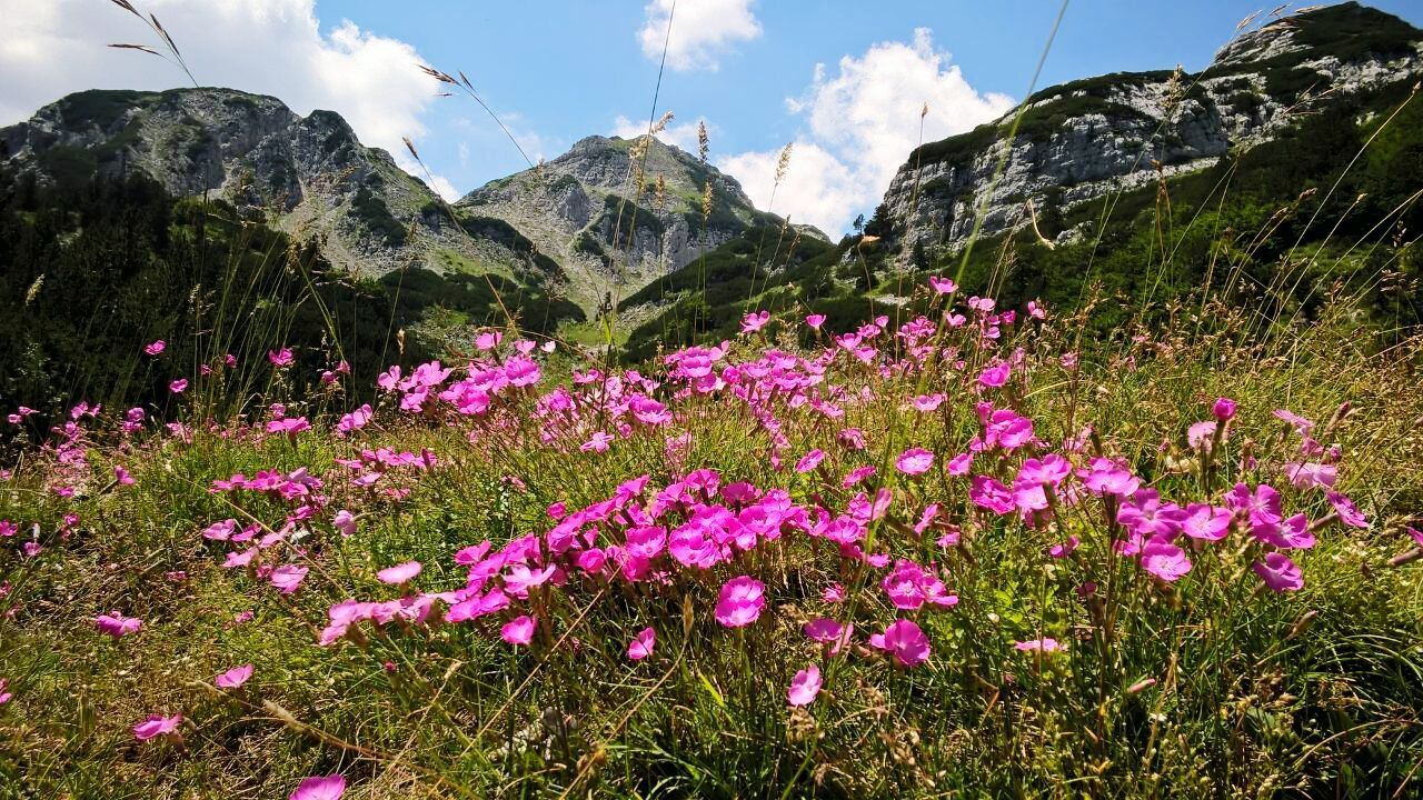 Nature Mountains Mountain Hiking Summertime Mountains And Sky Prenj Flowers Nature Photography Naturelovers