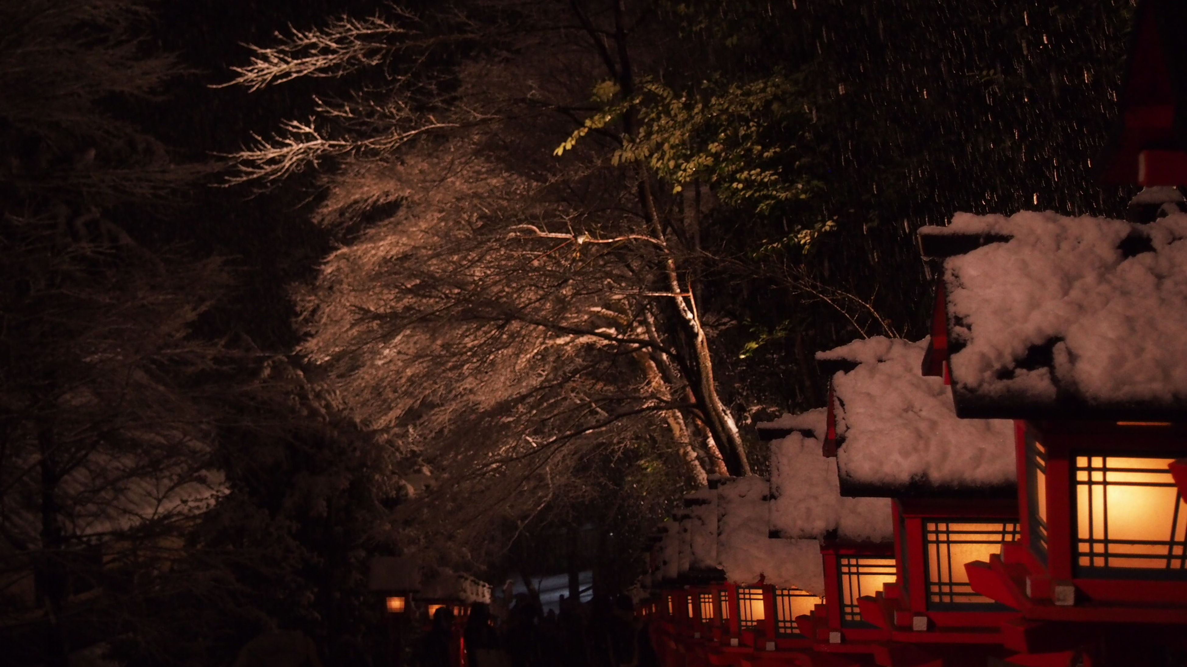 night, illuminated, tree, built structure, building exterior, architecture, house, outdoors, no people, nature, dark, high angle view, dusk, growth, auto post production filter, abandoned, branch, old, wall - building feature