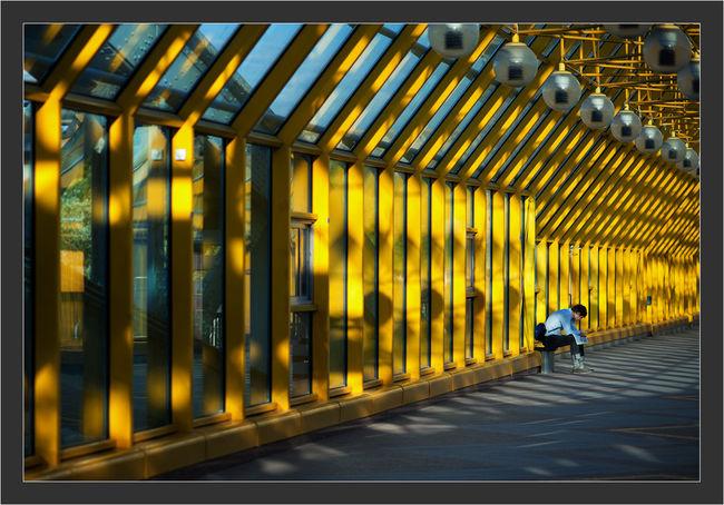 Day Modern Yellow One Man Mood Man Canon 5d Mark ıı Canon EF 100-400 L IS USM