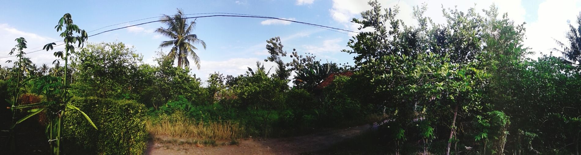 Back to nature Village Life Agriculture Tree Plant No People Nature Panoramic Georgeous Verybeautiful