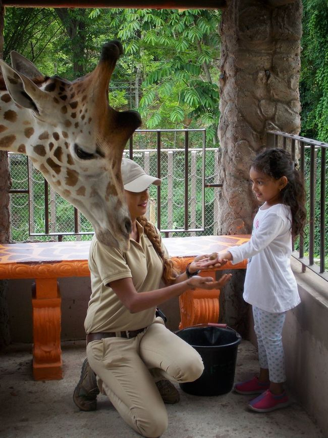 Trinidad And Tobago Emperorvalleyzoo Giraffe ZooKeeper Zoophotography Children Photography Childhood MemoriesChildren's Portraits People And Places