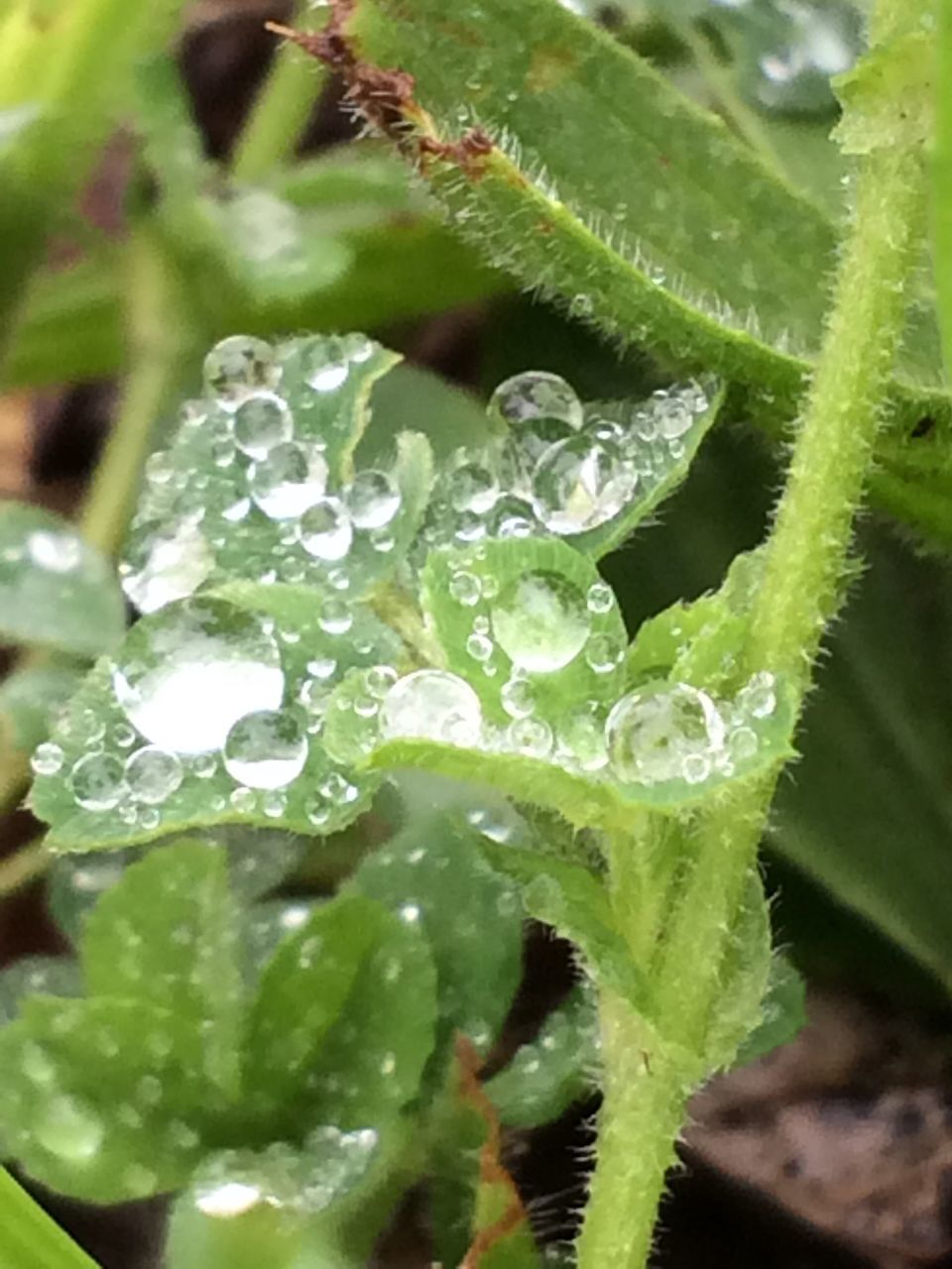 green color, freshness, leaf, drop, plant, nature, close-up, growth, wet, beauty in nature, water, no people, raindrop, day, fragility, outdoors