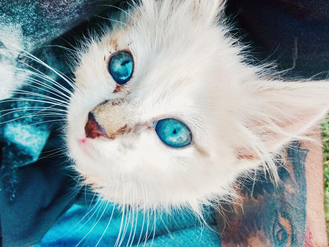 Mycat.