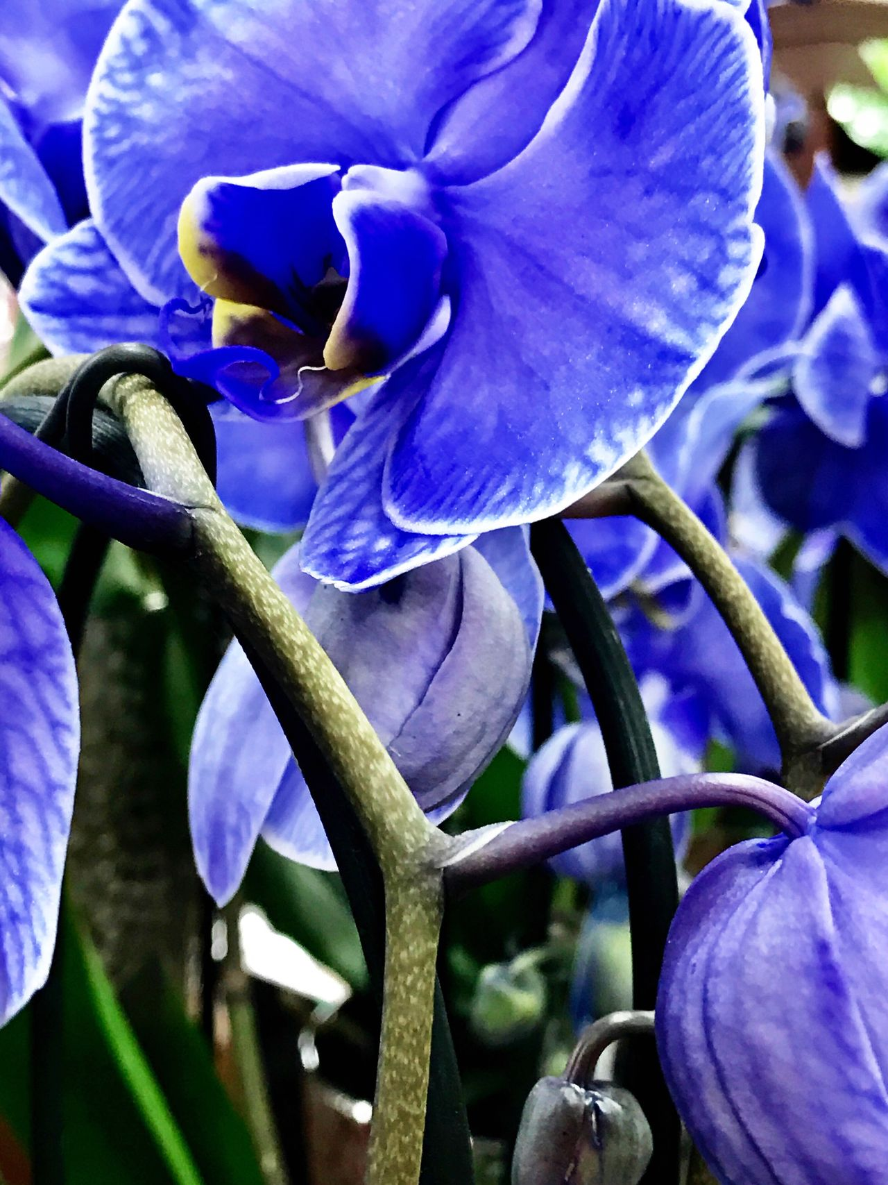 Flower Petal Growth Beauty In Nature Purple Nature Blue Flower Head Plant Close-up Fragility No People Freshness Blooming Iris - Plant Outdoors Day Full Frame Green Color Leaf