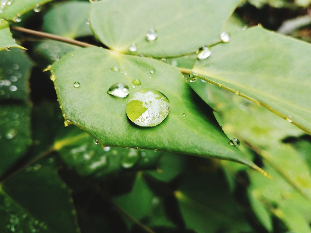 Beauty In Nature Leaf Nature Drop Water First Eyeem Photo EyeEmNewHere