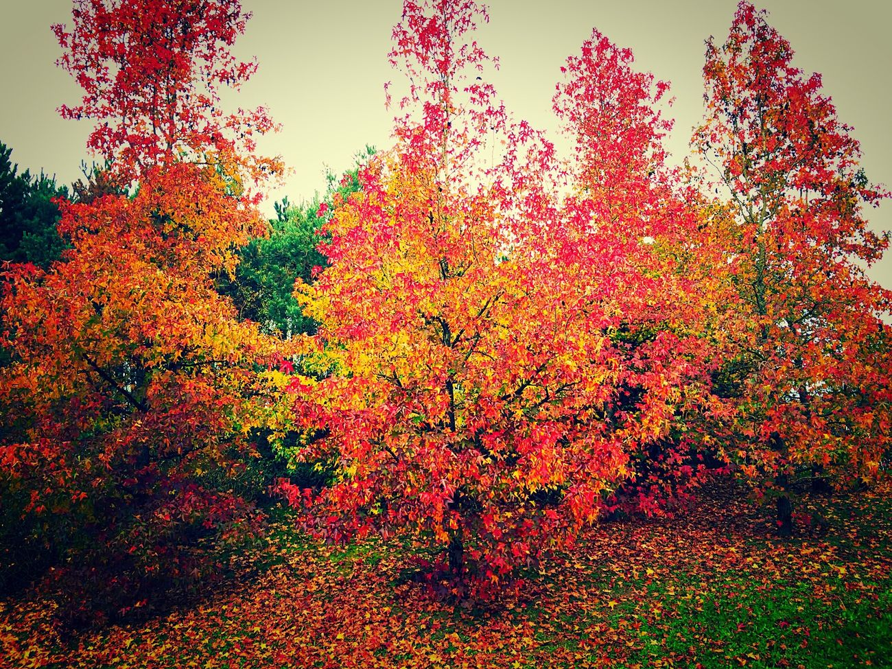 Autumn Colors Trees