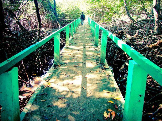 Stay on The Line @ Balurannationalpark