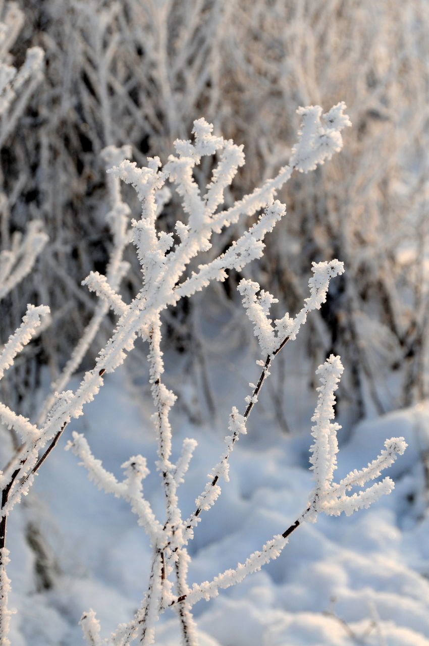 winter, cold temperature, snow, frozen, white color, nature, weather, ice, day, close-up, outdoors, frost, no people, beauty in nature, snowflake