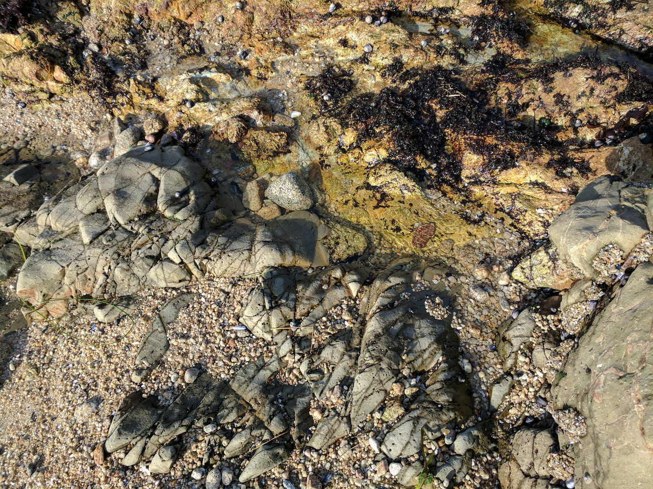 Close up of a small tide pool in rocks Backgrounds Beach Beauty In Nature Close-up Day Full Frame High Angle View Nature No People Ocaña Outdoors Rocks And Water Sand Sunlight Teture Tide Pool Walking Tide Pools And Rock Formations Tidepool Walking Tidepools Water