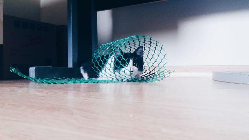 Arteira... Gatos One Animal Cat Domestic Cat Feline Curiosity Animal Themes Pets Domestic Animals Baby Gato😽 Gatosnegros Gatosfelizes Gatinha  Fofa No People