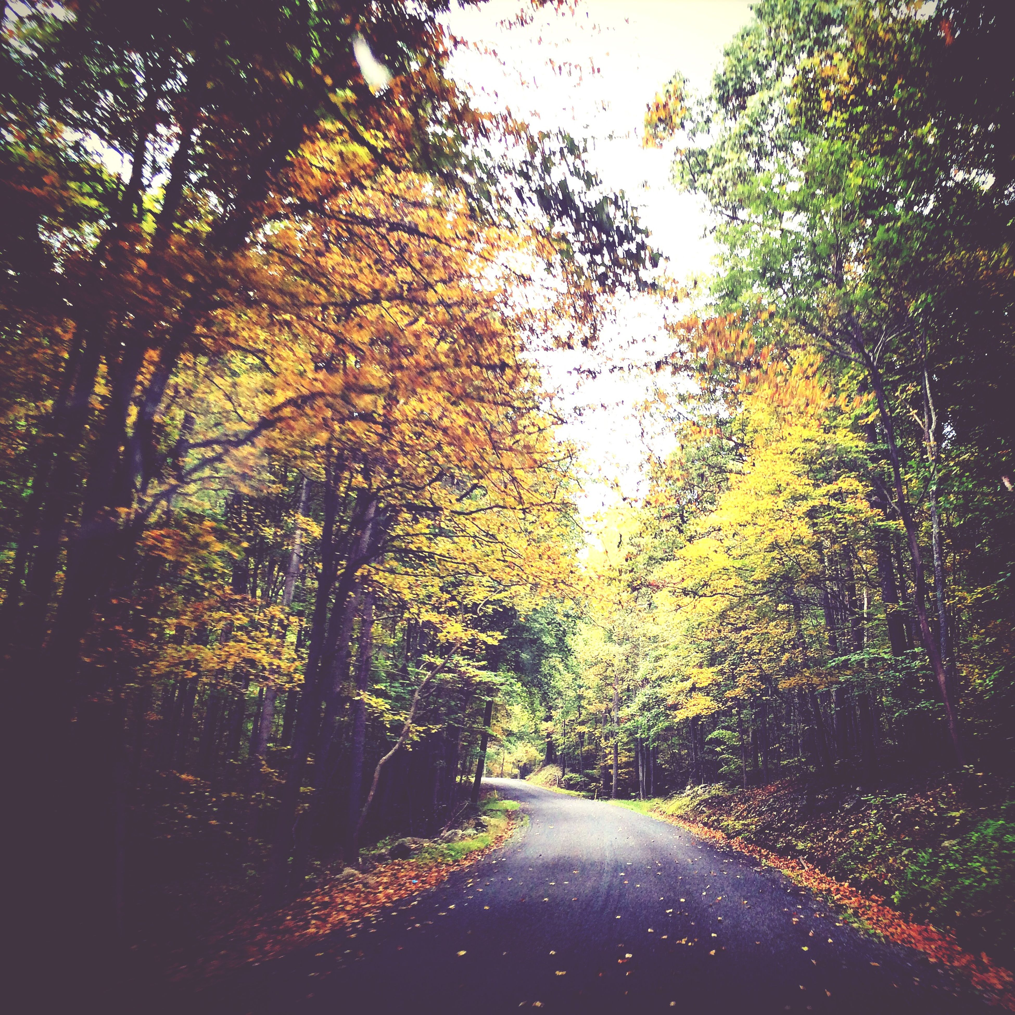 tree, the way forward, road, diminishing perspective, tranquility, autumn, transportation, nature, vanishing point, growth, change, tranquil scene, beauty in nature, season, empty road, street, scenics, country road, outdoors, no people