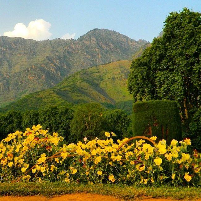 Flowers Garden J &k India . Nature Colors