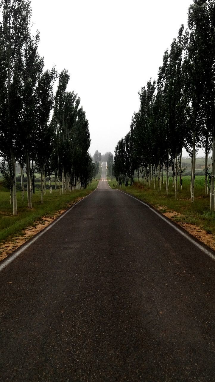 the way forward, diminishing perspective, tree, vanishing point, road, transportation, treelined, road marking, empty road, country road, clear sky, empty, asphalt, tranquility, long, tranquil scene, nature, street, growth, grass