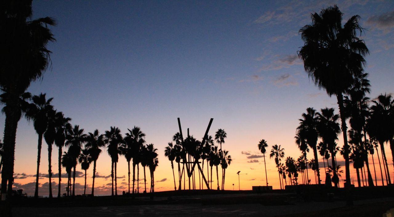 Sunset in Venice Beach. Favorite spot in the City of Angels. Beach California California Coast Los Angeles, California Losangeles Nature Palm Tree Sand Sky SoCal Sunset Sunset_collection Travel Venicebeach First Eyeem Photo