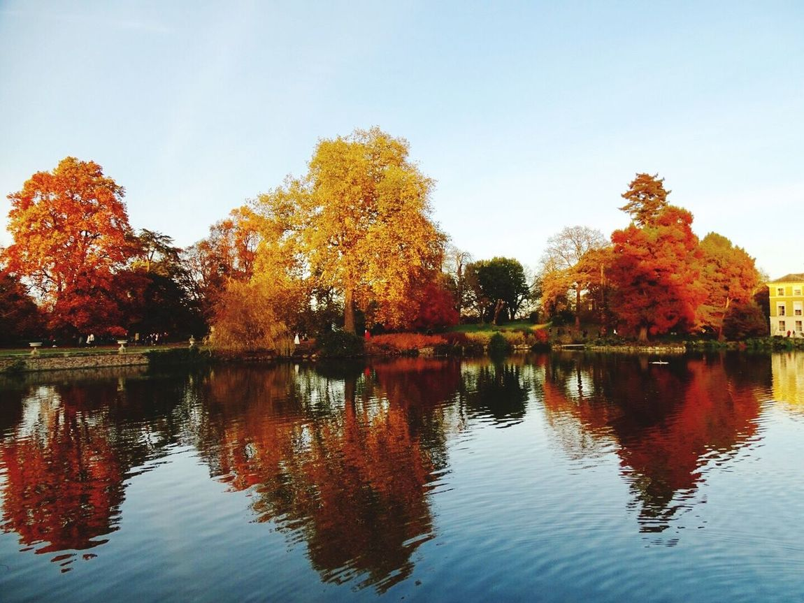 Tree Reflection Water Nature Autumn Change Beauty In Nature Scenics Outdoors Sky Waterfront Day Growth Lake No People City Kew Gardens Kew